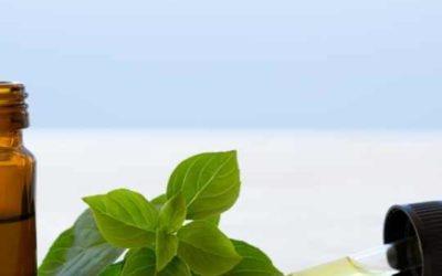 Los 7 Beneficios de la Albahaca que No conocías