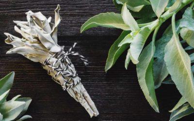 Los 3 Tipos de Salvia más usadas en el mundo