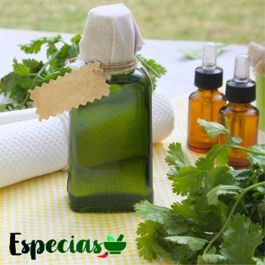 aceite esencial de cilantro cómo preparar de forma casera